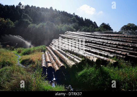 Irrigation of piles of wood, Sauerland, North Rhine-Westphalia, Germany / timberyard - Stock Photo