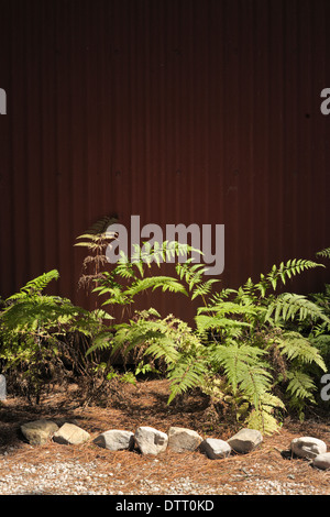 Ferns in front of a dark red tin background, Western Cape, South Africa - Stock Photo