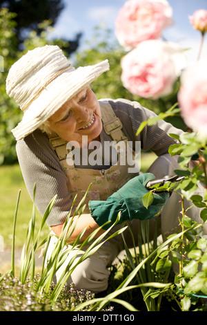 Happy senior woman cutting flowers from plants in her garden smiling - Elderly woman gardening in backyard - Stock Photo