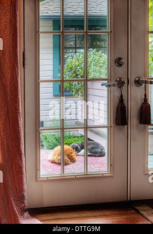 Dog and cat sleeping on patio - Stock Photo