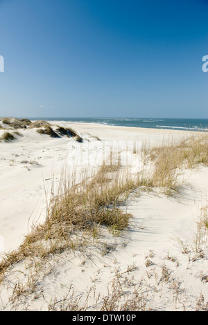 PEA ISLAND NATIONAL WILDLIFE REFUGE CAPE HATTERAS NATIONAL SEASHORE OUTER BANKS NORTH CAROLINA USA - Stock Photo