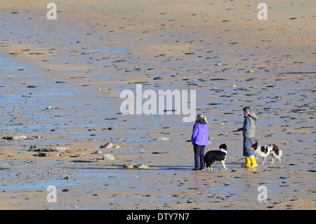 Two people walking their dogs on a sandy beach Cornwall UK - Stock Photo
