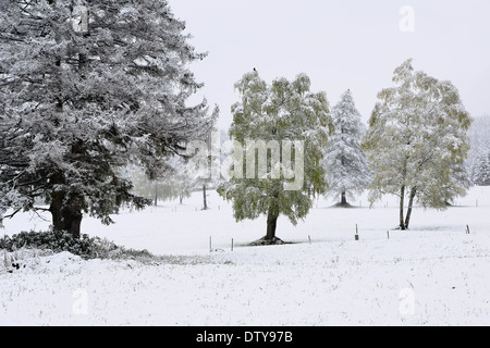 Dolomiti, snow, mountains, church, stone, winter, cold, wild, landscapes, colors, fog, animals, cows, forest, trees, - Stock Photo