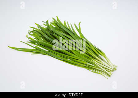 Chinese chive - Stock Photo