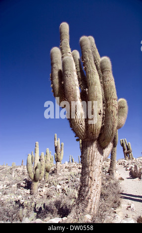 Pucara of Tilcara, Quebrada de Humahuaca, Jujuy, Argentine - Stock Photo