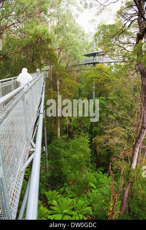 famous Rainforest in rain - Stock Photo
