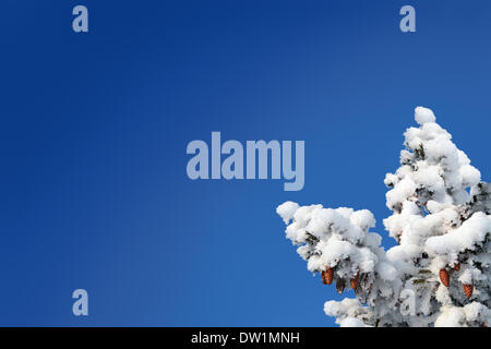 blue sky background with cones on fir - Stock Photo