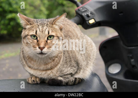 Undomesticated cat - Stock Photo