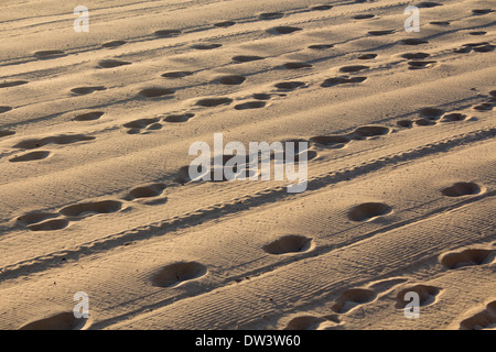 Footprints and tyre tracks in sand at dawn North Steyne Beach Manly Northern Beaches Sydney New South Wales NSW - Stock Photo