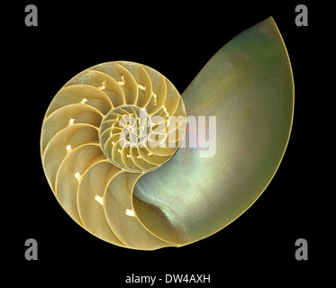 The inside of a Nautilus shell demonstrating a Fibonacci Spiral or Golden Spiral - Stock Photo