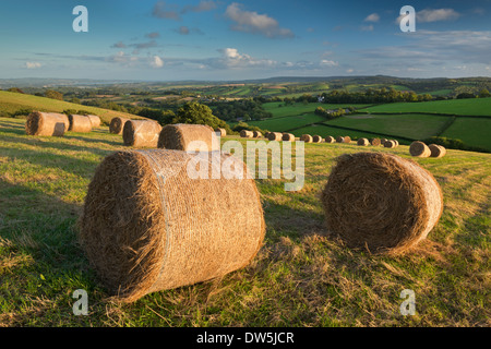 Hay Bales in the rolling fields of Mid Devon, England. Autumn (September) 2012. - Stock Photo