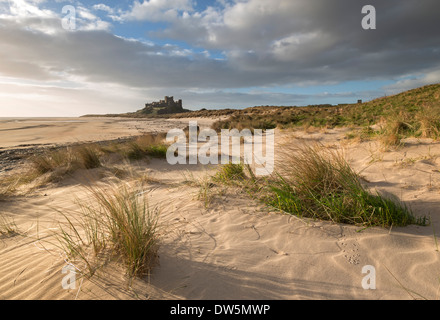 Sand dunes above Bamburgh Beach, with Bamburgh Castle in the background, Northumberland, England. - Stock Photo