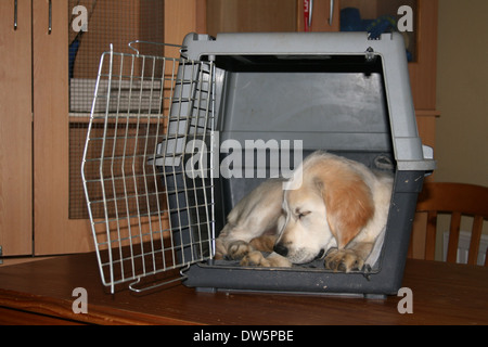 Dog Golden Retriever /  puppy sleeping in a travel cage - Stock Photo