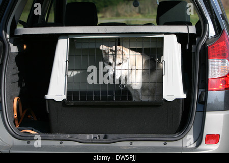 Dog Alaskan Malamute / puppy traveling in a cage in the trunk of the car - Stock Photo