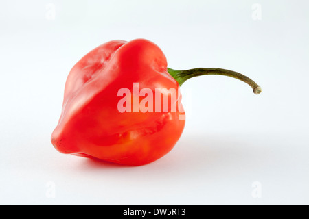 One red,very hot Habanero chilli peppers from  the C. Chinense cultivar of the Capsicum family - named after Havana - Stock Photo