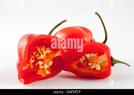 Two red,very hot Habanero chilli peppers from  the C. Chinense cultivar of the Capsicum family - named after Havana - Stock Photo