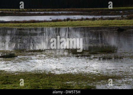 Floodplain grassland in the Lee Valley - Stock Photo