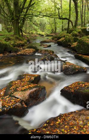 River Fowey tumbling through rocks at Golitha Falls, Cornwall, England. Autumn (September) 2013. - Stock Photo