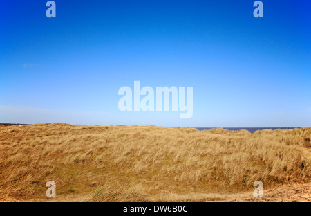 An extensive area of Marram Grass on sand dunes at Horsey, Norfolk, England, United Kingdom. - Stock Photo