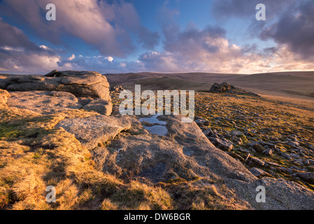 Rich evening sunlight bathes the moorland at Higher Tor in Dartmoor National Park, Devon, England. Winter (February) - Stock Photo