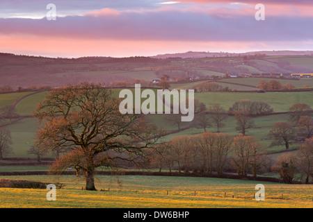Early morning winter sunlight over rolling Devon countryside, Devon, England. Winter (February) 2014. - Stock Photo