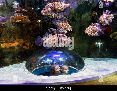 Tourists looking at Lion fish inside aquarium tank at Underwater Zoo aquarium at Dubai Mall in United Arab Emirates - Stock Photo