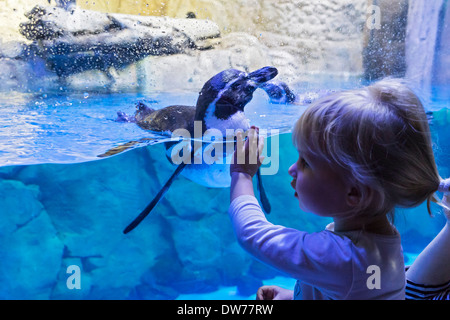 Girl and penguin at Underwater Zoo aquarium at Dubai Mall in United Arab Emirates - Stock Photo