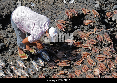 A local villager lays fish out in the sun to dry on laval rocks outside Porto Novo, Cape Verde, West Africa - Stock Photo