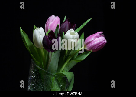 Bunch of coloured tulips in a crystal vase on a black background. - Stock Photo