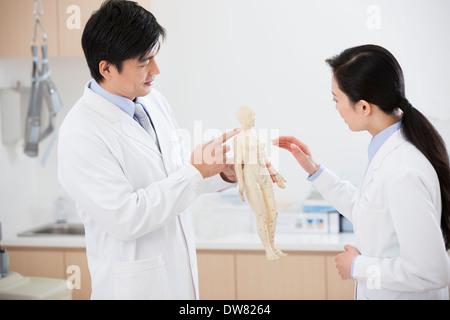 Doctors studying anatomical model - Stock Photo