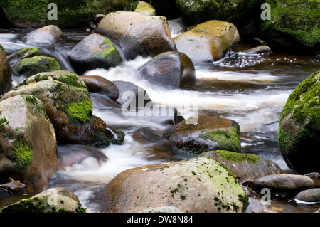 Forest brook - Stock Photo