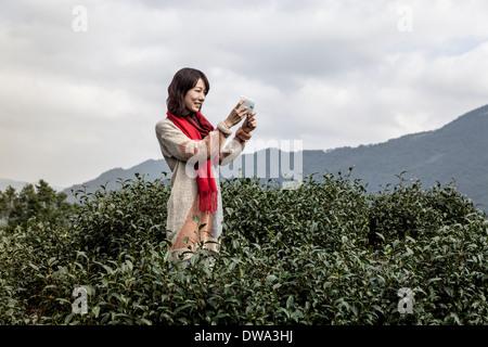Young woman taking photo on tea plantation, Taipei, Taiwan Stock Photo