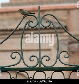 Bird perching on metal grate of gate, Marrakesh, Morocco - Stock Photo