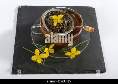 Greater Celandine tea - Stock Photo