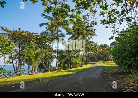 The Jungles of Nahiku on the Hawaiian Island of Maui. - Stock Photo