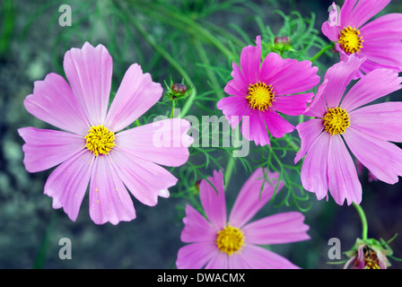 A close up image with lila flowers as background - Stock Photo