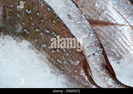 Fish on ice on display in fishermen market. Close up - Stock Photo