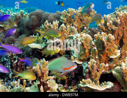 Colorful reef scene. - Stock Photo