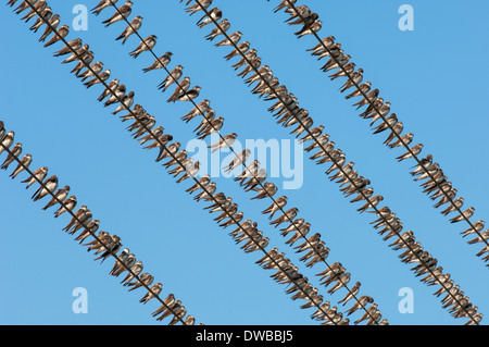 Birds sitting on wires - Stock Photo