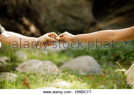 Man and woman's hands holding foliage - Stock Photo