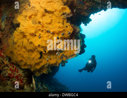 Diver and Black coral. - Stock Photo
