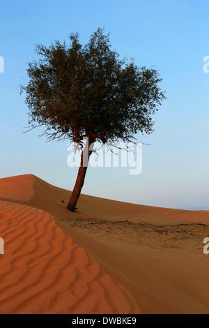 Wüste Rub al Khali - Ras al Khaima - Stock Photo