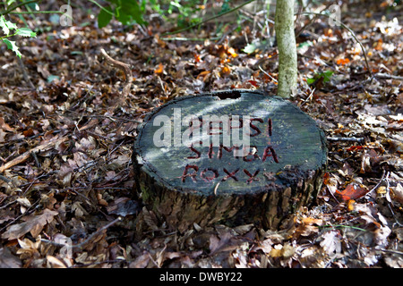 A pet cemetery in a wood dappled in sunlight with a tree trunk tomb stones with 3 pet name inscribed. - Stock Photo