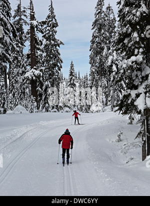 WASHINGTON - Skiers on the cross-country ski trails near Windy Pass in the Snoqualmie Pass Nordic Ski Area. - Stock Photo