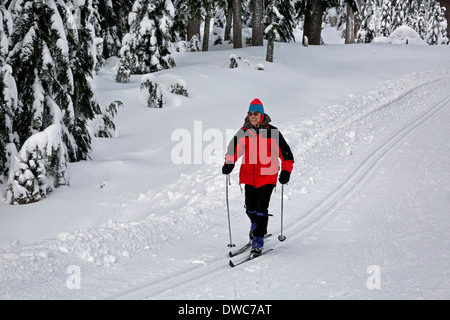WASHINGTON - Skier on the cross-country ski trails near Windy Pass in the Snoqualmie Pass Nordic Ski Area. - Stock Photo