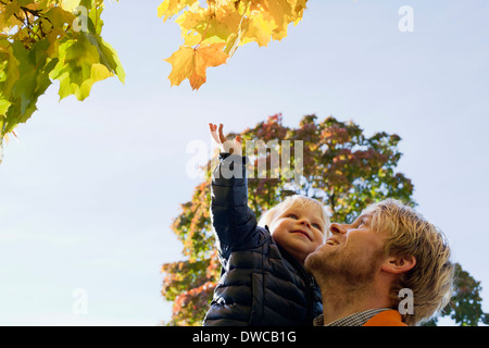 Father and son looking up at trees - Stock Photo