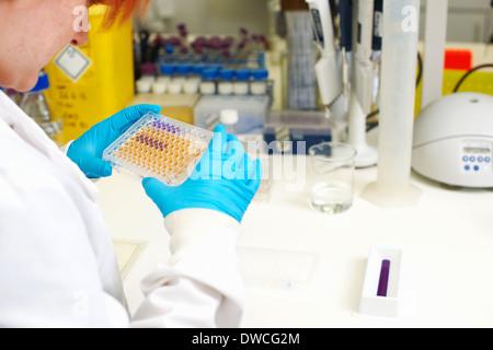Female scientist examining multiwell dish - Stock Photo