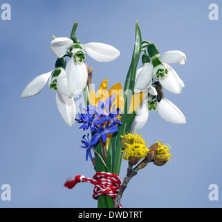 snowdrop and crocus ,squill,spring flowers tied with red thread on a blue background - Stock Photo