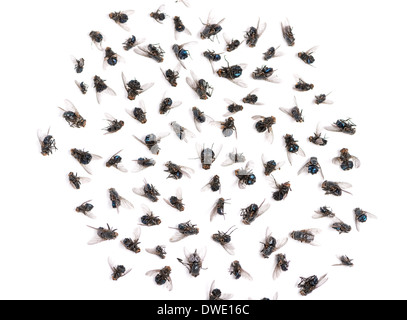 Group of dead flies in front of white background - Stock Photo