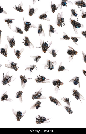 Close-up of a group of dead flies in front of white background - Stock Photo